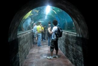 Estudiantes en un túnel del acuario